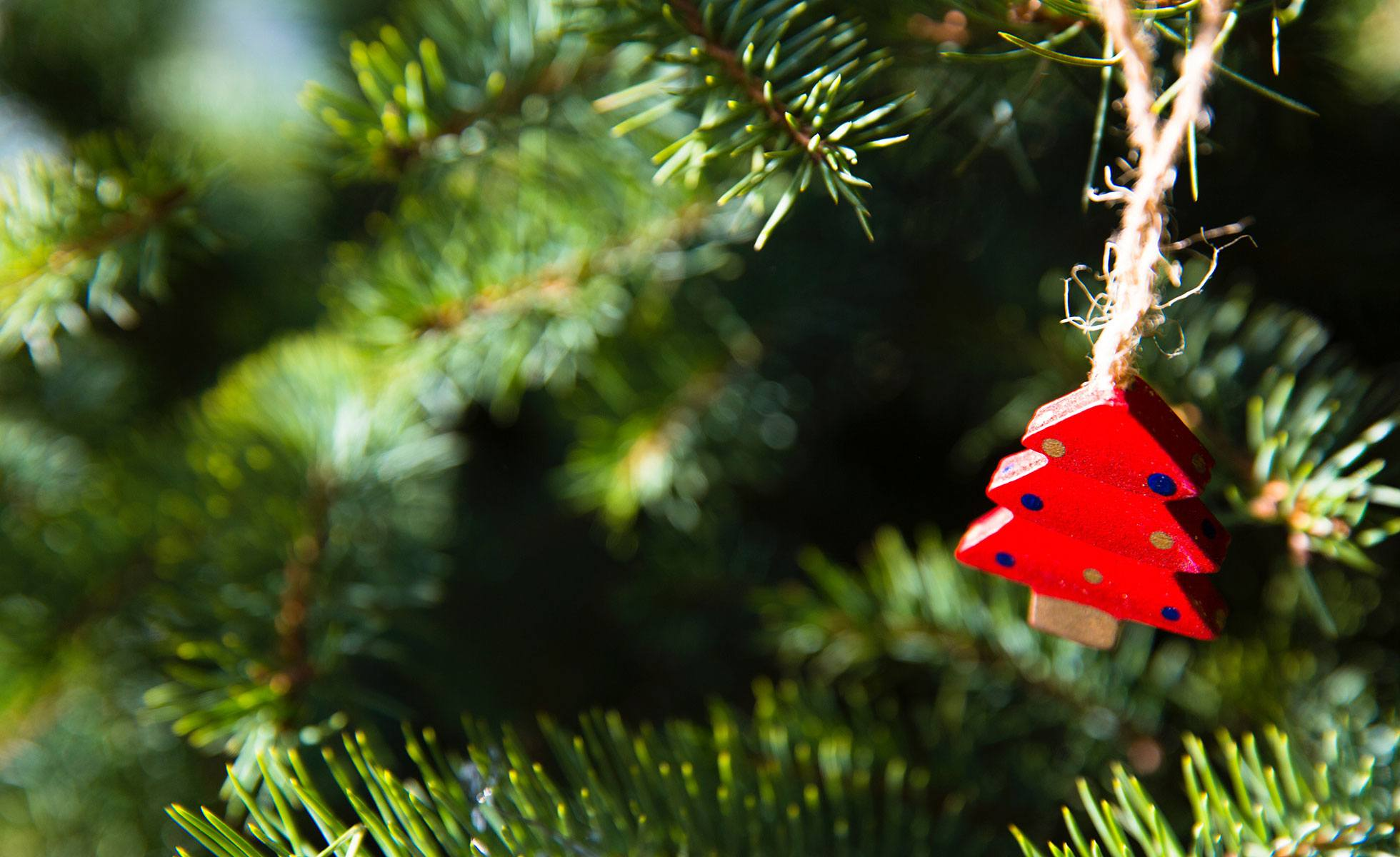 Eco-friendly Christmas tree ideas - David Suzuki Foundation